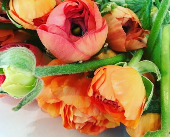 La renoncule: fleurs du printemps